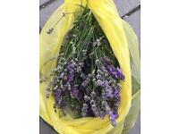 Free bag of freshly cut lavender (it's being collected on Friday)