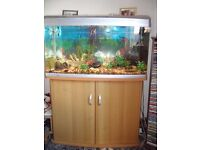 Large 120 litre Fish Tank and Cupboard Base.