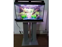 fish tank 40 ltr with fish