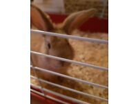 baby girl rabbit with cage