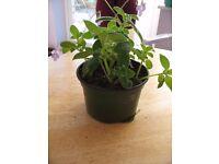 Indoor plants in pots