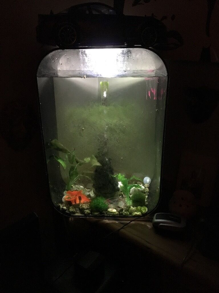 biorb life 60 litre fish tank in leicester leicestershire gumtree. Black Bedroom Furniture Sets. Home Design Ideas