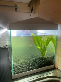 53L fish tank with light and filter