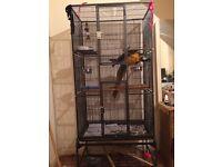 Big bird/parrot cage