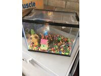 19ltr fish tank