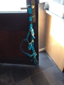 Blue head collar and lead rope only used 2-3 times