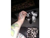 2baby buns free dbl hutch there vaced nuetuerd chipped all supplies you need
