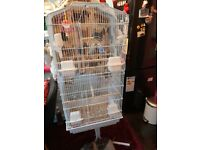 Pair budgies and cage