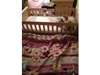 Maman and Papas cot bed with mattress,VGC