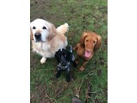Helen's Dog Walking Services/ Dog Walker