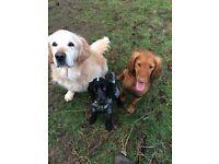 Helen's Dog Walking Services/ Dog Walker