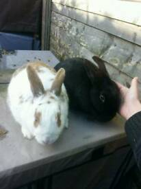2 lovely rabbits looking for forever home