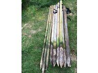 12 Wooden Tree Stakes various sizes