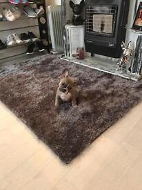 Amazing French bulldog boy available!