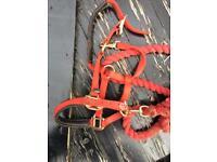 Pony lightly used padded head collar (xs) headcollar for sale  Erdington, West Midlands