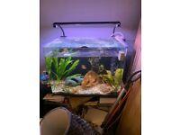 100 litre aquarium fish tank