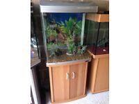 Aqua ar 620 t fish tank 130l full set up with stand filter heater 2 light gravel ornament all work