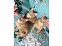 Three ginger kittens