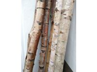 8 Silver Birch Logs range of heights from 1.8m - 2.4m Can be used to build wedding canopy (chuppah)