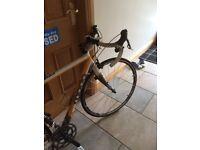 Moda Rubato Road Bike