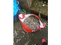 Free Bag of Beach Pebbles
