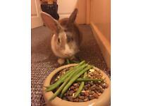 Friendley house bunny