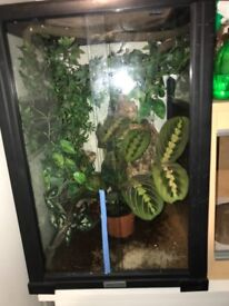 3 young crested geckos for sale with set up