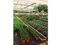 IMMEDIATE START - seasonal retail role at plant nursery is Slough/Gerrards cross