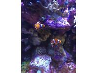 Various Fish - Rock & Coral for sale