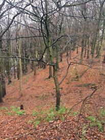 TO LET - LOG CABIN WITH 5 ACRES WOODLAND & PADDOCK - HALIFAX HOBBY FORESTRY/WORKSHOP/CAMPING - RARE