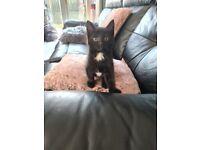 Beautiful fluffy kitten