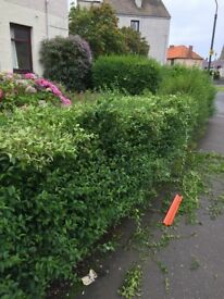 Is your garden in need of a tidy up, free quotes, waste rem by us 07542536495