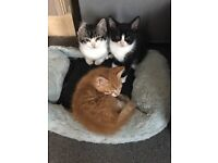 11 lovely kittens looking for there forever loving home