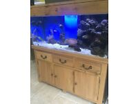 5 ft solid oak wood marine tropical cold water fish tank with setup (delivery/installation )