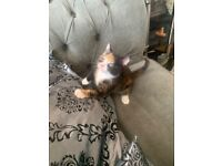 ADORABLE KITTENS READY NOW (Females &Males)