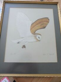 BARN OWL PICTURE by ROBERT B DUTHIE **REDUCED PRICE**