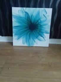 Canvas for sale