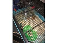 Hamster with cage and feeding accessories