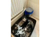 GORGEOUS 4 KITTENS for sale - ready to leave