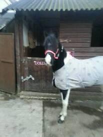 Sharer 11.2 fancy pony