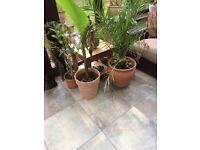 Indoor and outdoor plants in pots