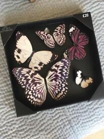 Next Decorative Butterflies BRAND NEW!