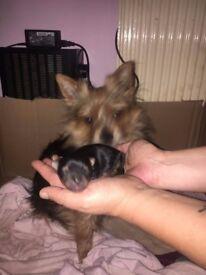 little 8 week old boy
