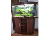 JUWEL VISION 180 LITER BOW FRONTED FISH TANK AND STAND FOR SALE,FULL SET UP