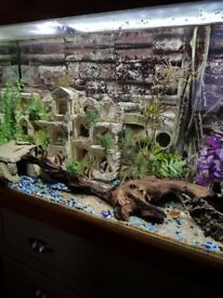 Fish tank 200 litre with all accessories
