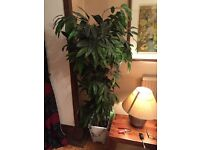 Large 6ft Artificial plant