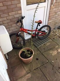 Crediton Bike for sale Carl fischer £20 only. Excellent bike for riding kids