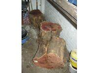 Yew logs. Free.