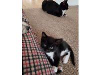 Kittens £25 each
