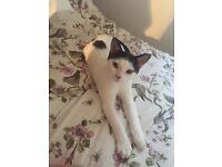 Kitten needing loving home